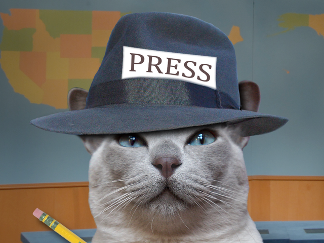 Кошки Кинджа, продолжая миш INTEGRTIES Journalismwise