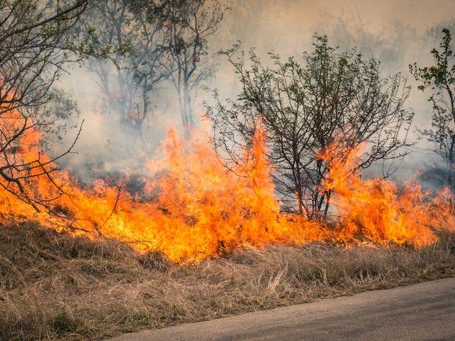 Niños queman sus libros, accidentalmente echan fuera el poder a 135.000 hogares