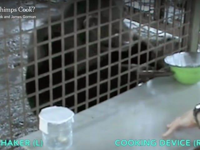 チンパンジーは、唯一の私たちは、アペイフレンドリーな簡単なオーブンを作った場合は完全に調理するだろう