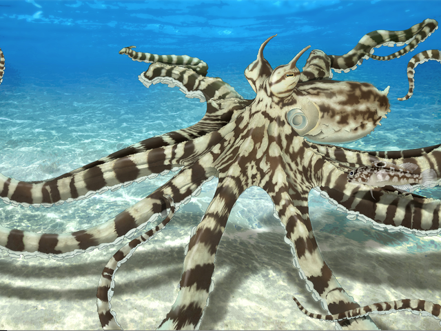 The Talented Mimic Octopus
