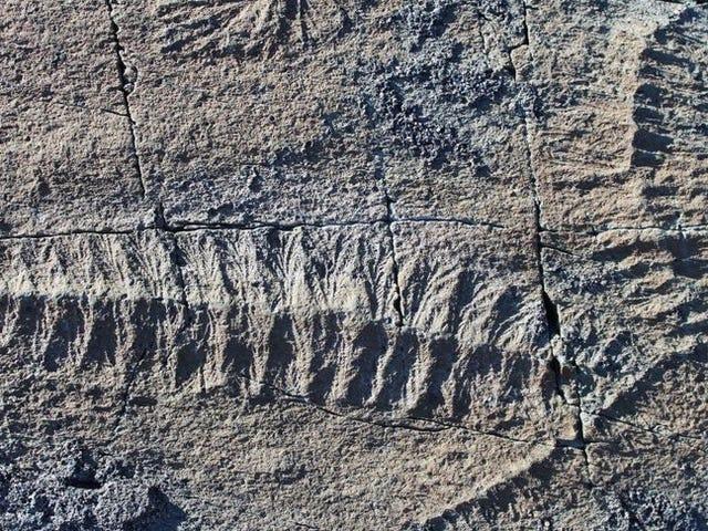 GPS har afsløret, hvordan de ældste multicellulære organismer havde sex
