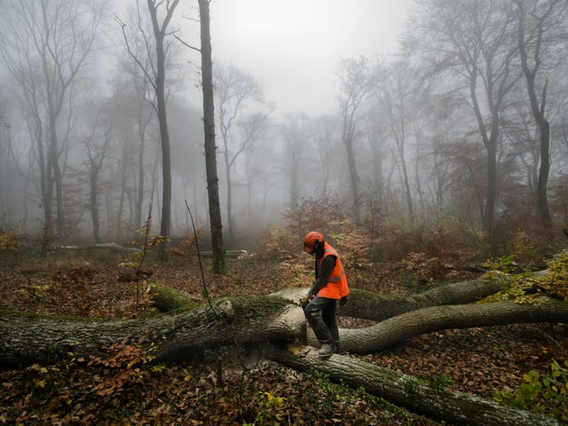 Ikea Is Buying Up Whole Forests, and So Is Apple