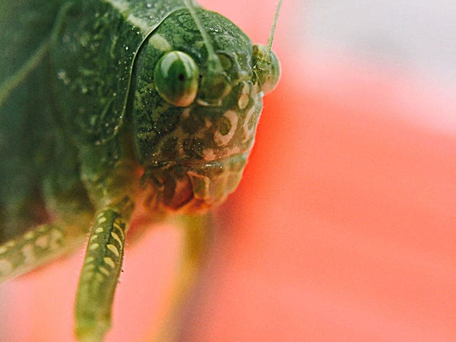 18 Creepy, Crawly Photos Of Insects