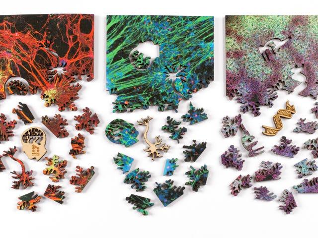 用这些华丽的科学难题探索微观世界