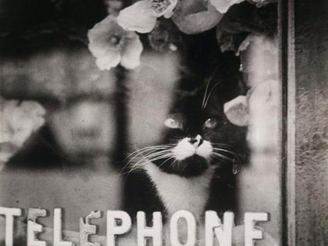 Brassai - Kucing