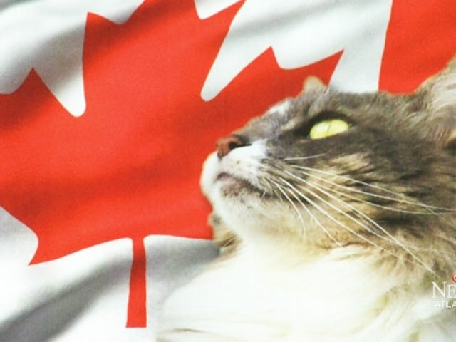 So, there's a cat running for Prime Minister of Canada.