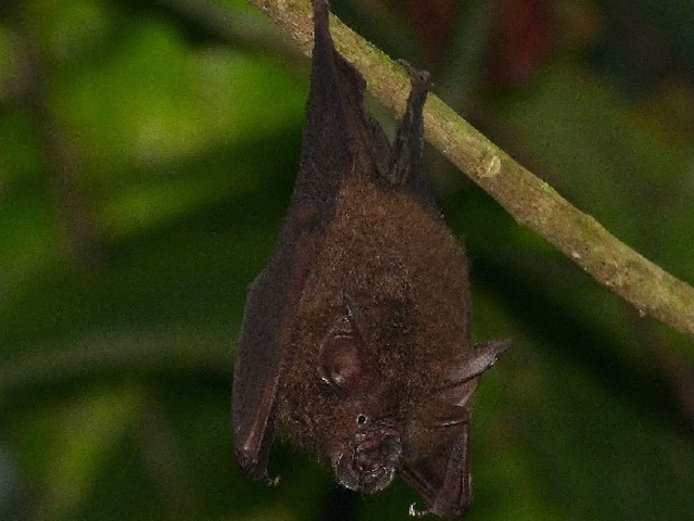Bats in India Have Found a New Home on Coffee Plantations