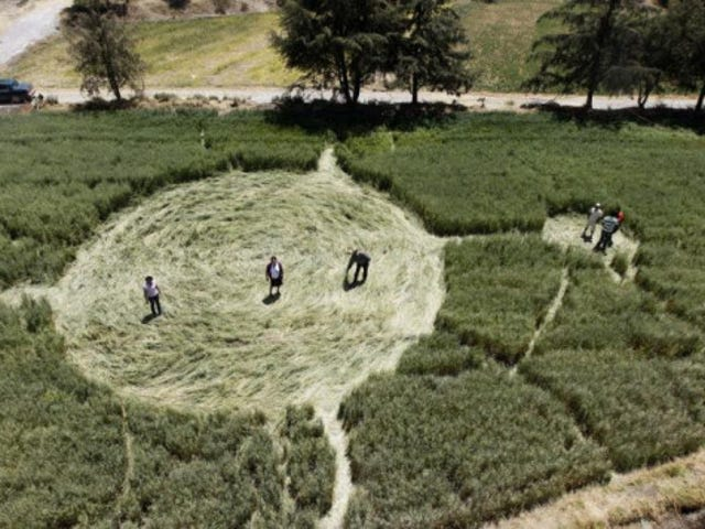 तस्मानिया पर खोजी गई रहस्यमयी फसल चक्र