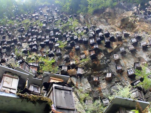 Pemelihara Beekeeper Cina Sebenarnya Mempunyai Alasan Baik untuk Menggantung Ratusan Beehives Off a Cliff