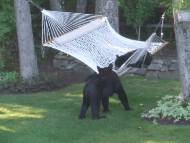 Jeg er inspireret af denne ene bjørn