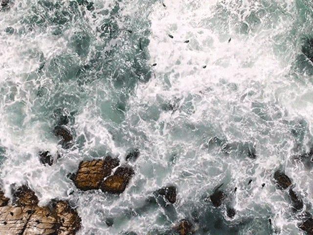 Questa splendida veduta aerea della costa è come una pittura in movimento
