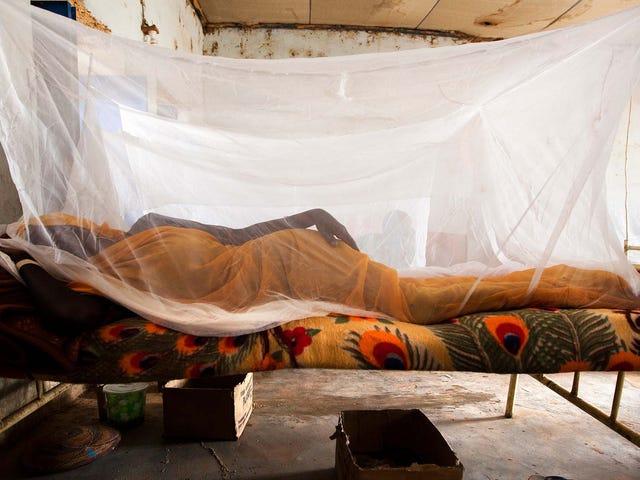 Simple Techは、2000年以来アフリカで660mのマラリア症例を止めています