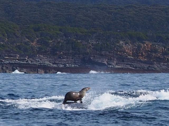 Crazy Photo toont een zegel met behulp van een walvis als surfplank