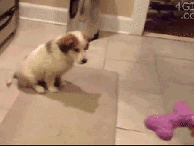 Yakalamak!