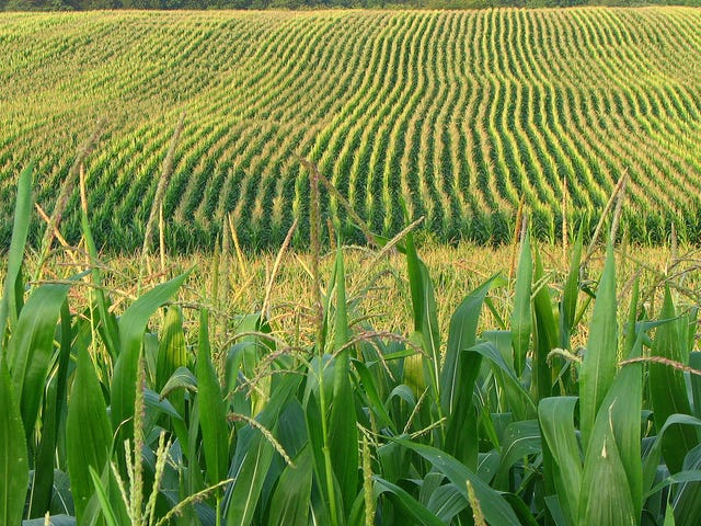 No, America Doesn't Grow As Much of the World's Corn as You Think It Does
