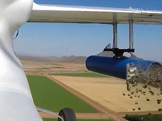 Watch This Government Drone Barf Out Thousands Of Irradiated Moths
