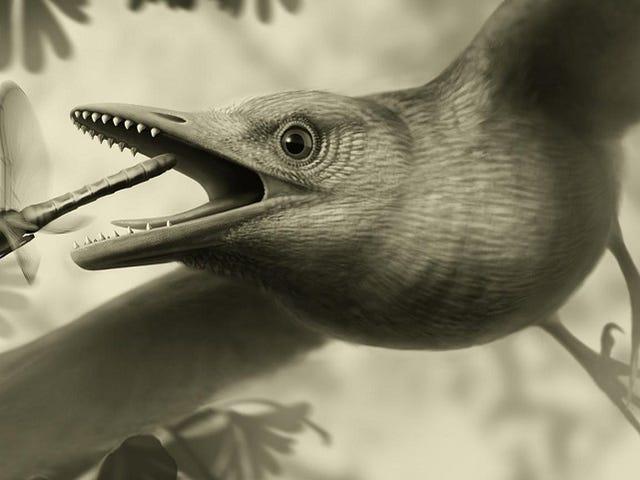 Hóa thạch 125 triệu năm tuổi cho thấy những con chim đã sống (và bay) như thế này
