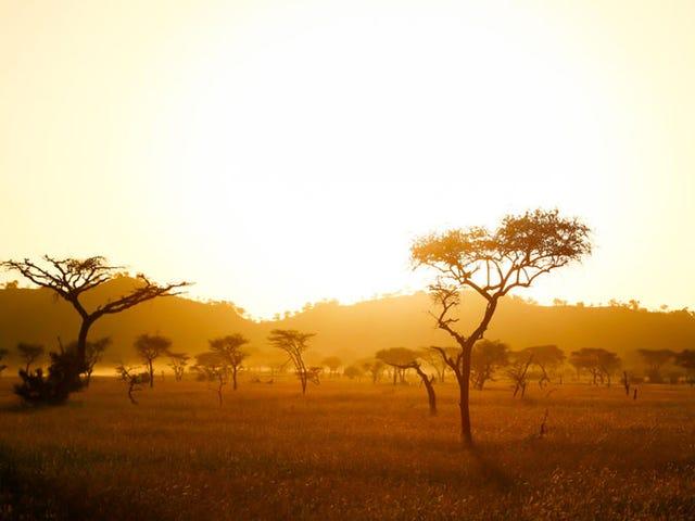 Estudar no exterior na África é um jogo de mulher