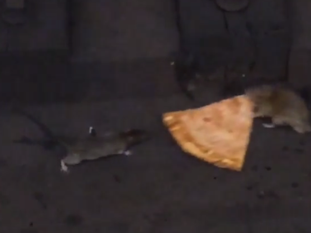 Opportunistic Pizza Planters Are Ruining Pizza Rat