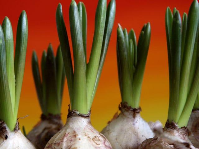 Bahçenizi Kışa Hazırlayın, Bu nedenle İlkbaharda Çiçeklenmeye Hazır