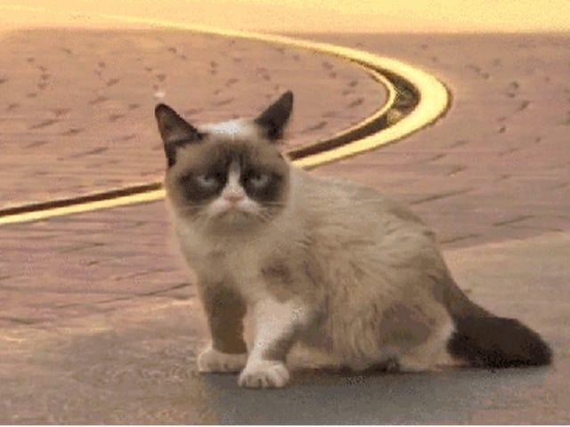 RIP, Tardar Saus, aka Grumpy Cat