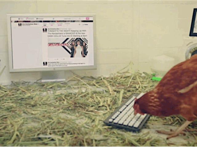 Un restaurante pone una gallina en tu cuenta de Twitter