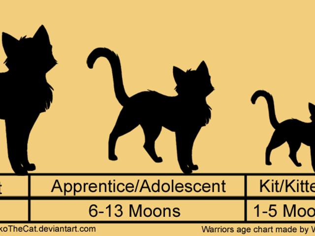 Кошки - это плоский круг