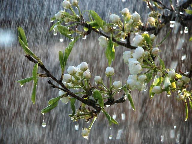 D'ici 2100, le printemps pourrait être presque un mois plus tôt