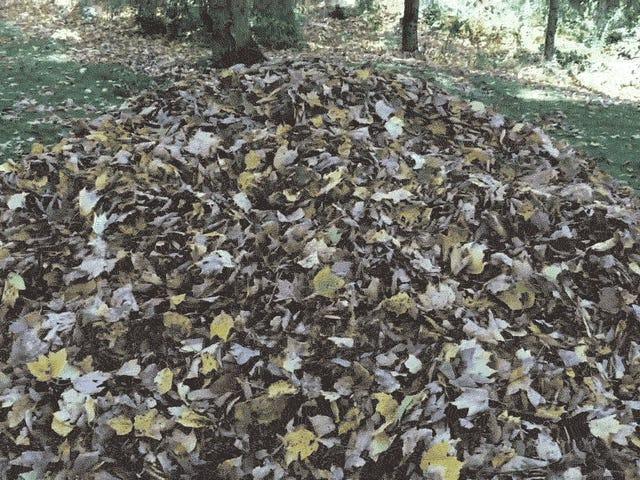 犬は秋が美しいことを証明