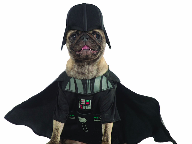 The Best Geeky Halloween Costumes For Your Pet