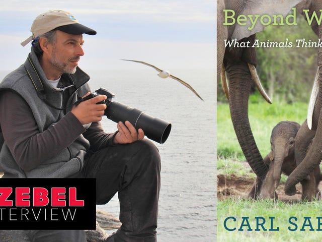 संरक्षणवादी कार्ल सफ़िना बताते हैं कि क्यों हम उनके साथ इलाज करते हैं, इसलिए पशु हमारे साथ बेहतर व्यवहार करते हैं