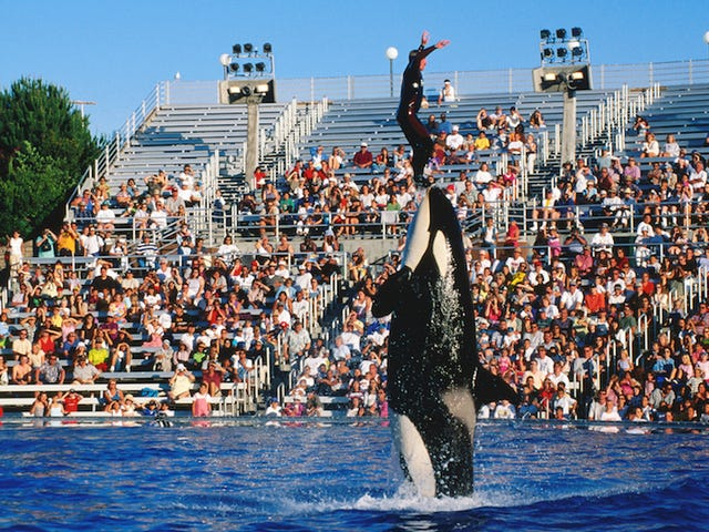 SeaWorld San Diego to 'Phase Out' Current Orca Show, Replace With More 'Natural' Show