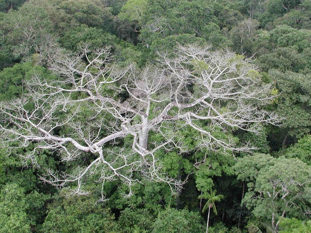 Un extraño efecto secundario de la oleada de incendios forestales pone en peligro 65 millones de acres de bosques