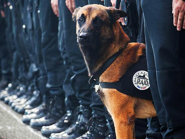 Αγαπημένο γαλλικό αστυνομικό σκυλί σκοτώθηκε, πέντε αξιωματικοί τραυματίστηκαν κατά τη διάρκεια της επιδρομής κατά της τρομοκρατίας στο Παρίσι