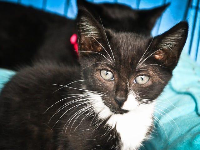 Du kan vedtage et kæledyr fra en hytte gratis denne weekend
