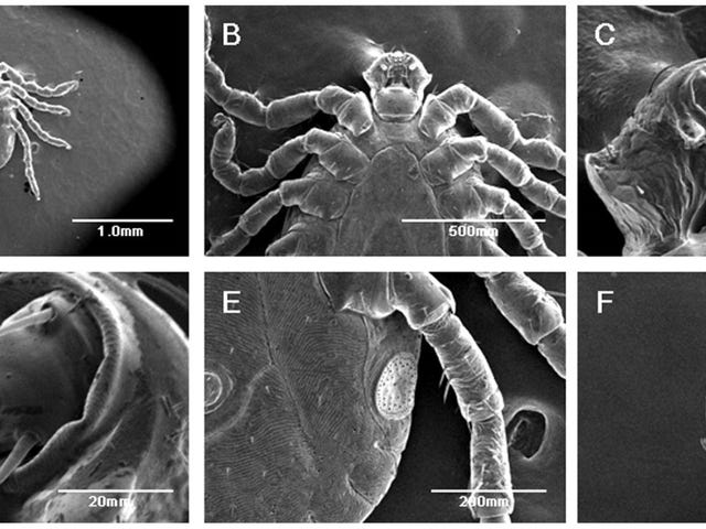 These ticks shrug off airless vacuums and powerful electron beams like they're no big deal