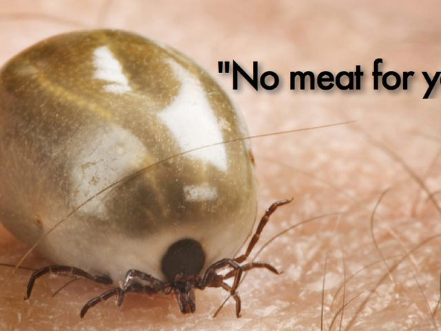 A tick bite could turn you into a vegetarian