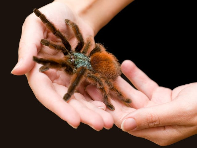How to Get Over Your Fear of Spiders and Start Caressing Tarantulas