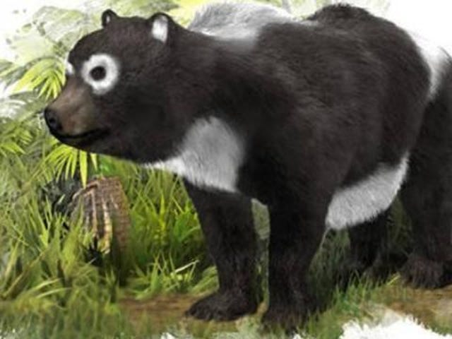 The earliest known panda-like fossils have been found - in Spain!?