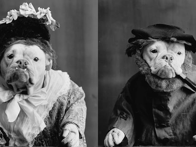 1905 photographs of bulldogs dressed like humans were eerie and/or adorable