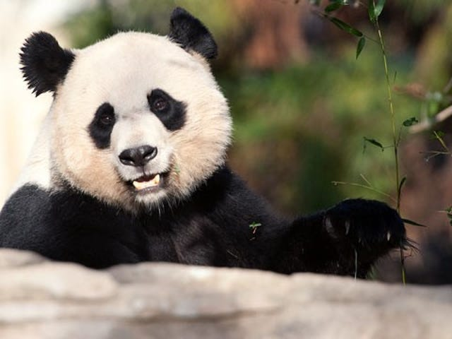 Sad Panda News. Warning: do not read if you were planning on having a good Monday. (UPDATED)
