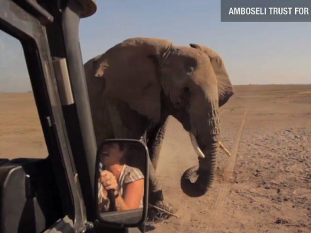 Tiny Elephant Is the Baby Jessica of the Animal Kingdom