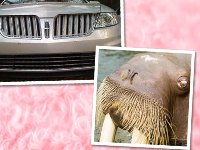 Vanity Fair Compares Lincoln MKS To Cunnilingus-Mouthed Walrus