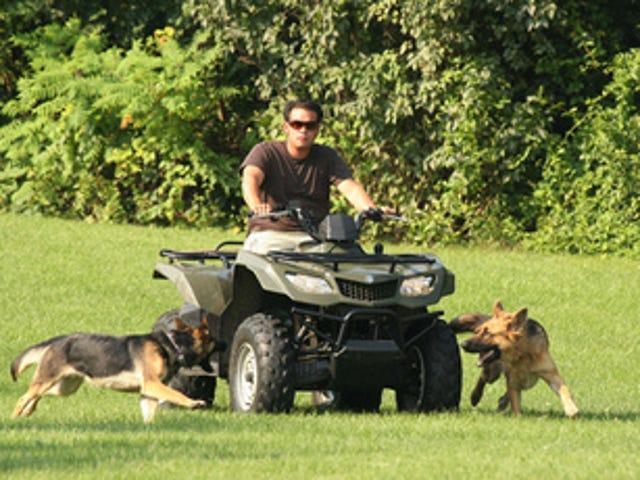 Jon Gosselin Gets Rid Of Family Dogs; Chris Brown Begins Community Service