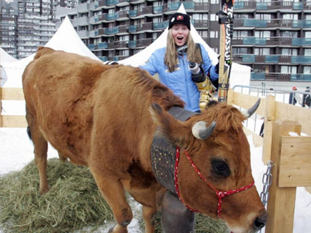 Lindsey Vonn Wins Gold, Would Prefer Another Cow