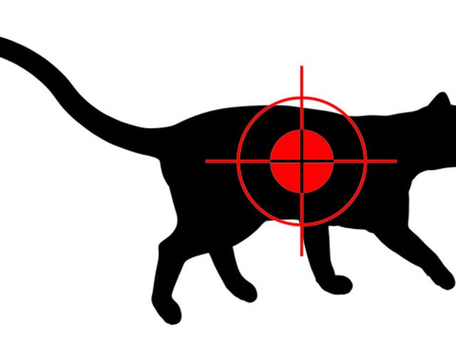 Horrible Person Kills a Democratic Campaign Manager's Cat and Scrawls 'Liberal' on Its Corpse