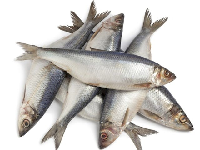 Science Says Eat Your Herring, Young Lady