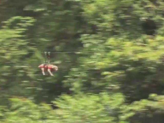 Flying Zip-Line Bulldog Totally Beats Skating Bulldog