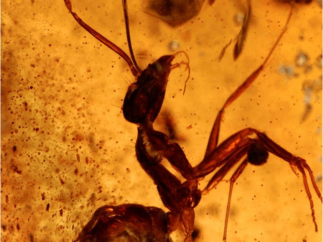 A fifty million-year-old ant, whose existence could change the history of India