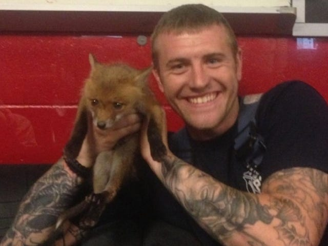 Firefighters Save Adorable Baby Fox, Adorably Want to Keep It